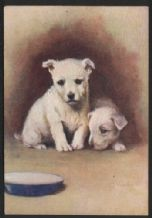 West Highland White terrier tobacco cigarette card postcard dogs